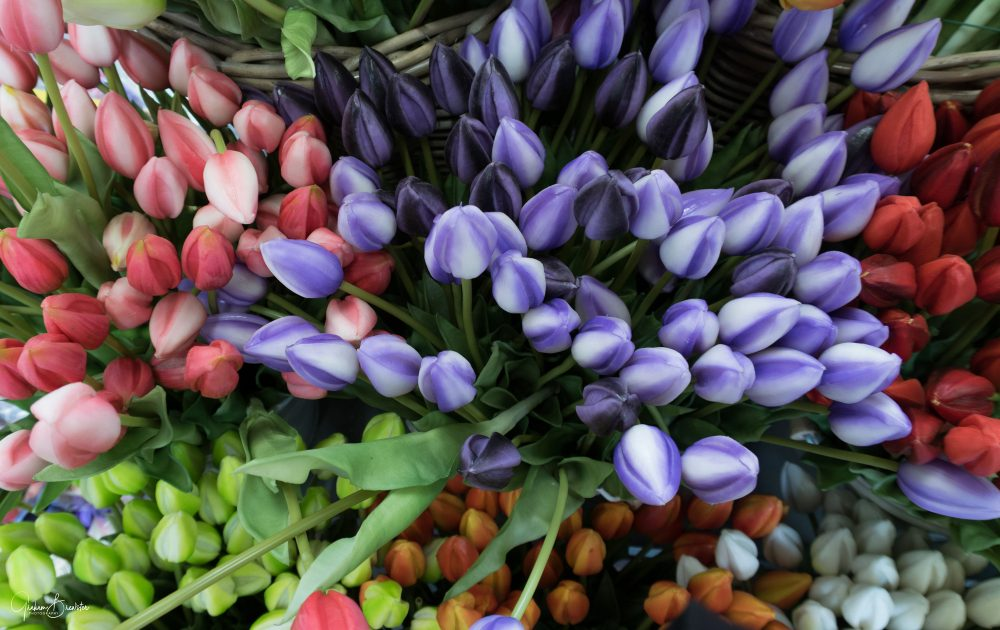 Graham Brewster Photography - European Photography Prints - Tulips