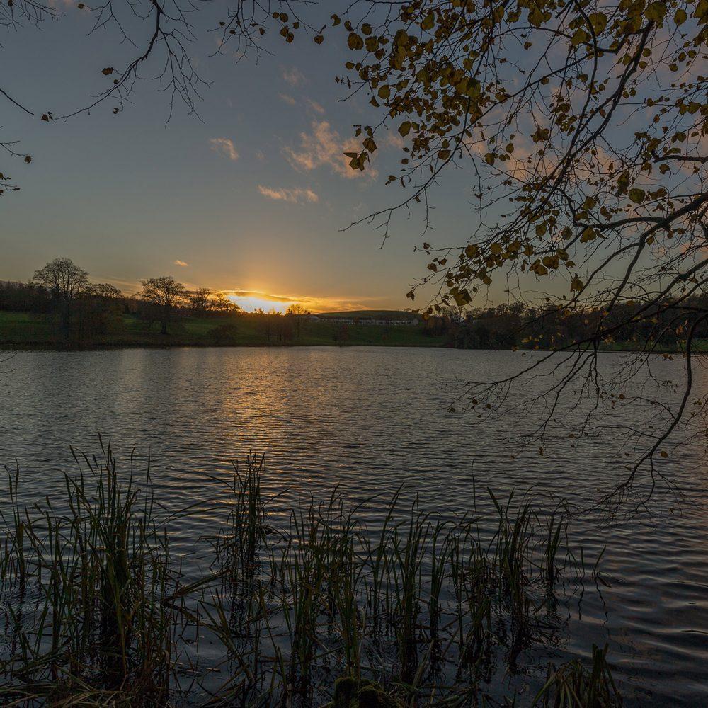 Graham Brewster Photography - Yorkshire Prints - Yorkshire - Reeds at dusk