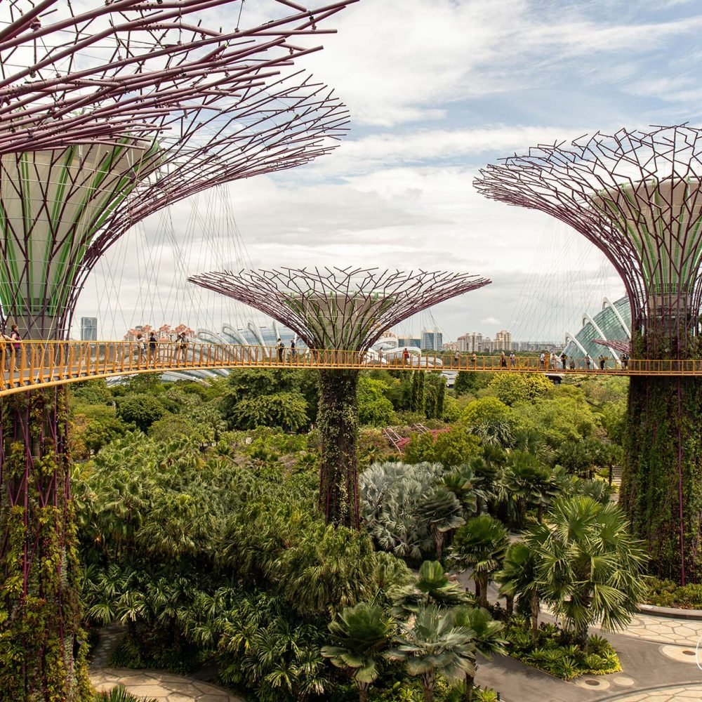 Gardens by the Bay - Graham Brewster Photography - Singapore Prints